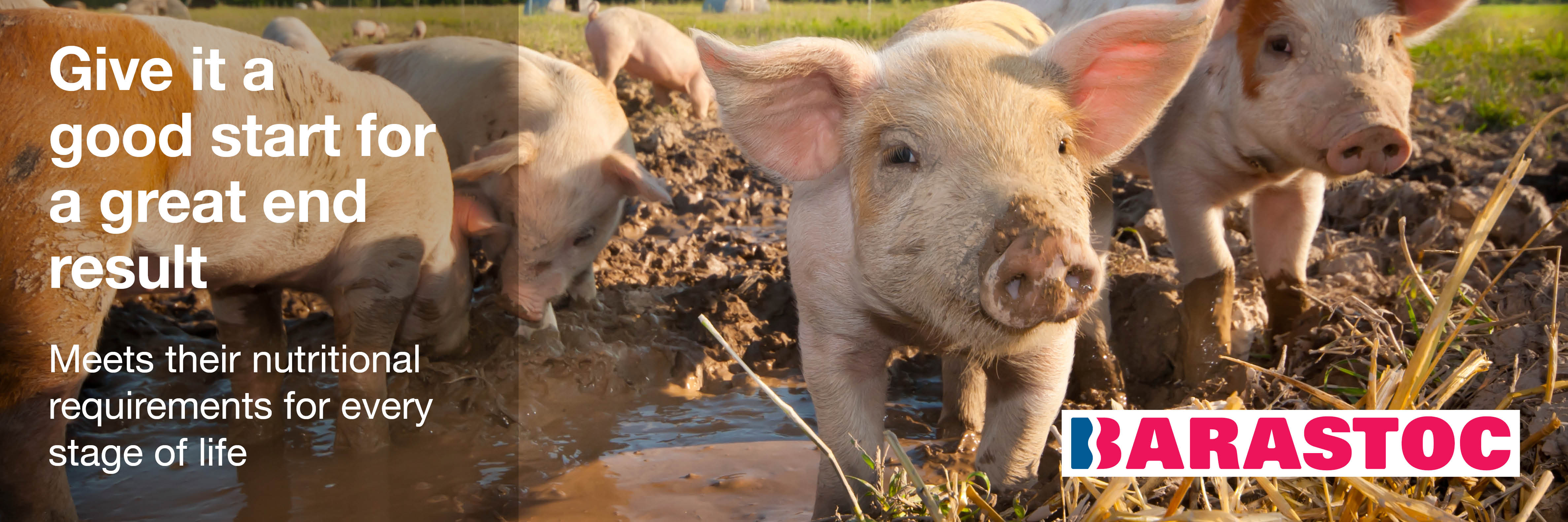 Lifestyle Pig Producers - Ridley